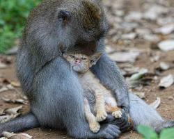 Monkey & The Kitten