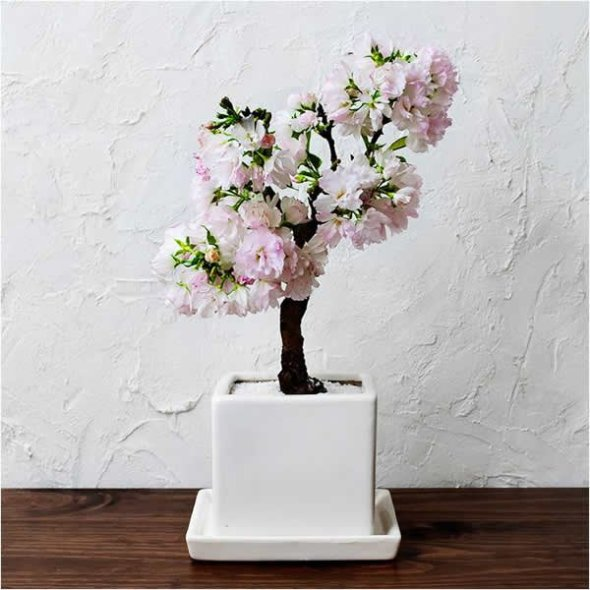 You can sip this hanami sake quietly while at home, while wishing that the cherry bonsai would bloom every year.